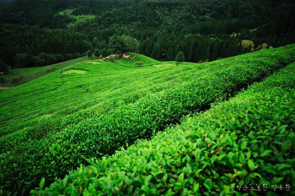 greenland+사본
